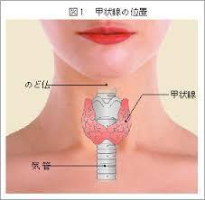 甲状腺.jpg